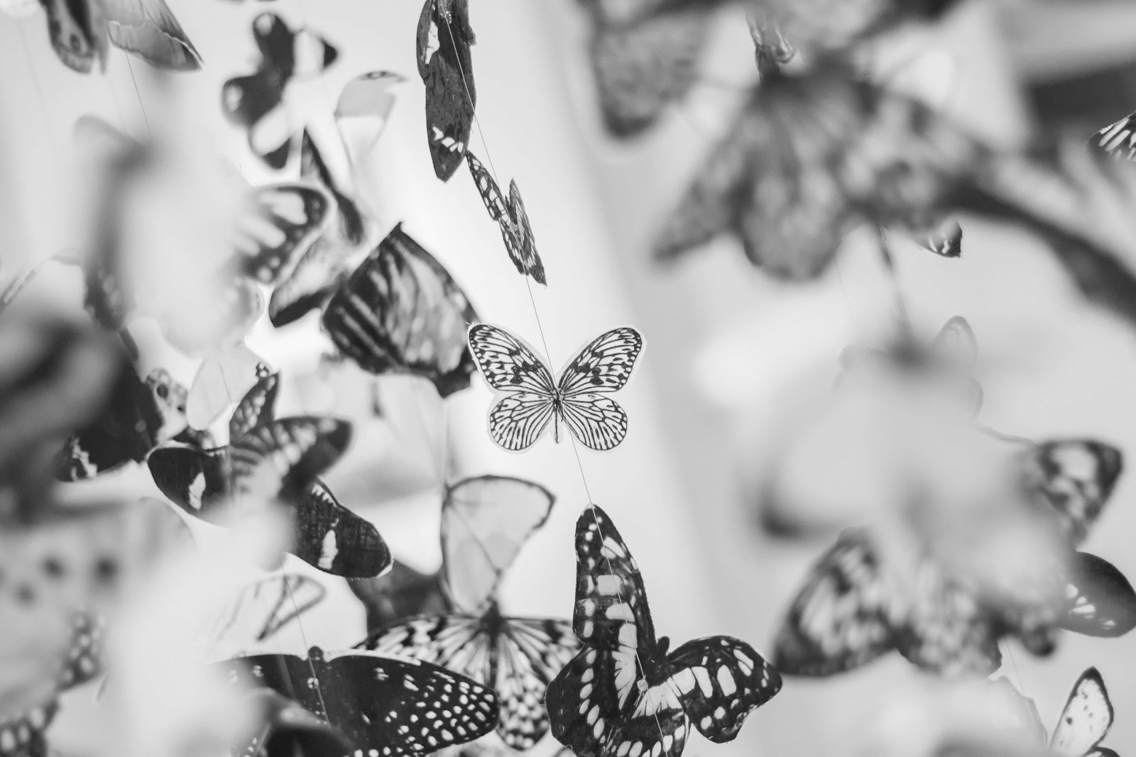 butterflies-black-and-white-images