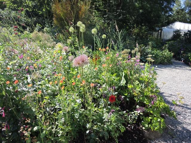 Staudenbeet mit Allium, Nelkenwurz und Dahlien