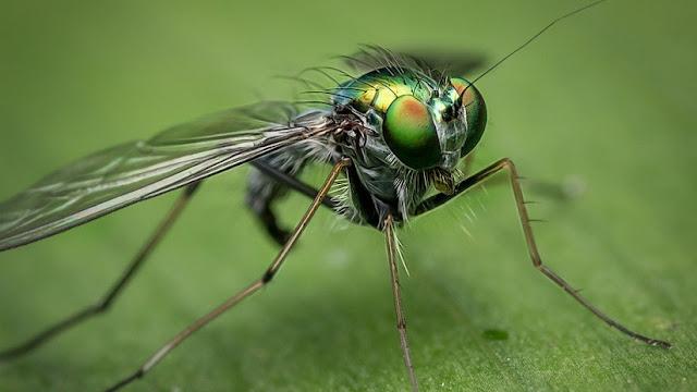 Revelan qué tan sucias son las moscas