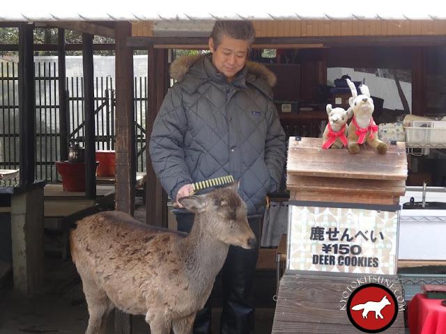 daim de Nara qui se fait gratter la tête au Japon