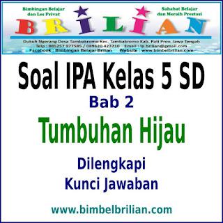 Download Soal IPA Kelas 5 SD BAB 2 Tumbuhan Hijau Dan Kunci Jawaban