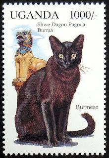 တင္ေဇာ္လြင္ – ဗမာေၾကာင္ (BURMESE CAT)
