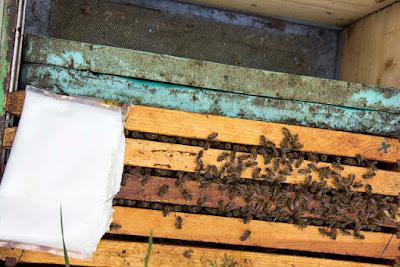 Νοέμβριος : Μέλισσες και μελισσοκόμος
