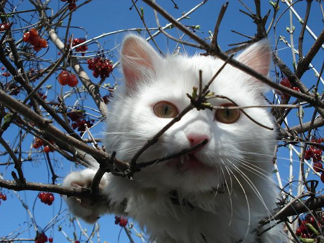 gato entre ramas