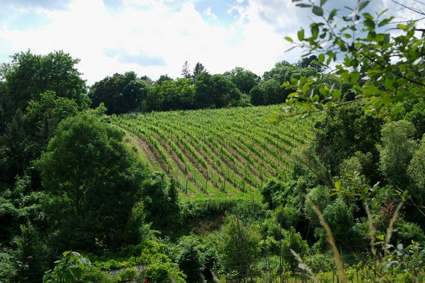 vienne döbling stadtwanderweg 1 kahlenberg nussdorf randonnée vignes