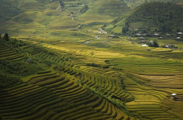 Mu Cang Chai (Yen Bai)