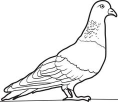 Pigeons Coloring Pages Images And Photo For Free