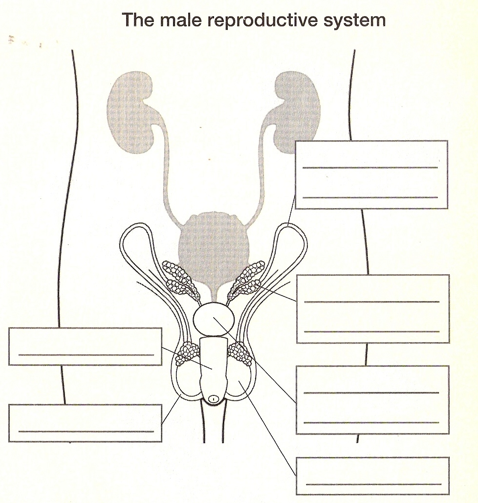 Reproductive Template Female System Blank
