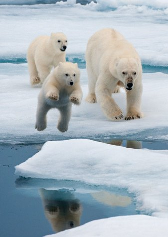 A VUELO DE UN QUINDE® - EL BLOG !!!!! .::::.: OSO POLAR : NATIONAL ...