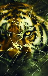 wallpaper layar HP Retak Harimau