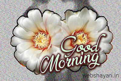 white flower good morning images