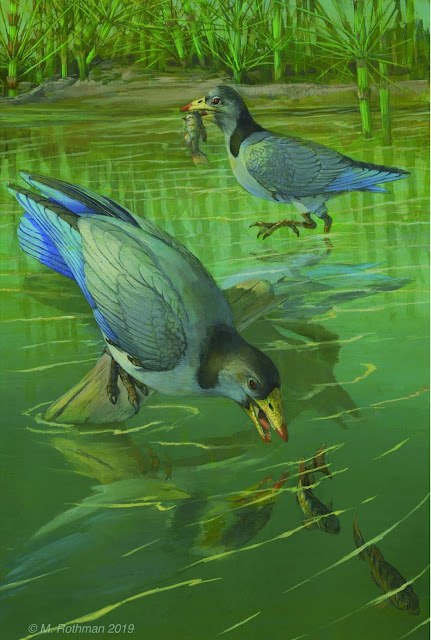 New finding on origin of avian predentary in Mesozoic birds