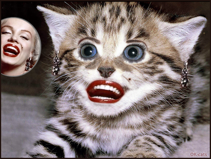 Photoshopped Cat picture • Marylin Monroe's kitty is happy. Funny and weird kitten but cute