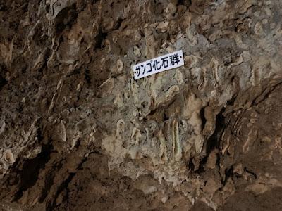 サンゴ化石群