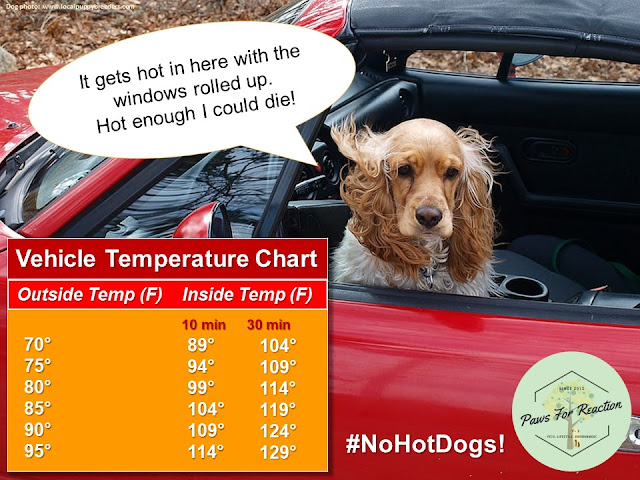 Heatstroke in dogs: Vehicle temperature chart for dogs in hot cars