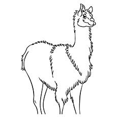 Free Images Llama Coloring Sheet