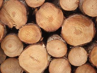 gia công cưa xẻ sấy gỗ Thông 1