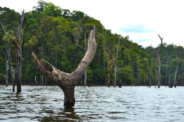 Guyane, balade en Canoë,  barrage du petit saut, Sinnamary, EDF, Kourou, circuit canoë