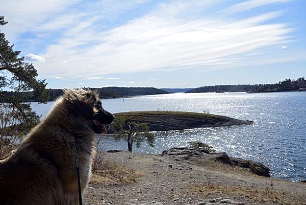 leonberger kalvøya