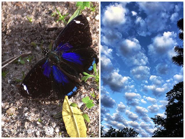 Mariposa con tonos de azul/ cielo con nubes- Chacra Educativa Santa Lucía