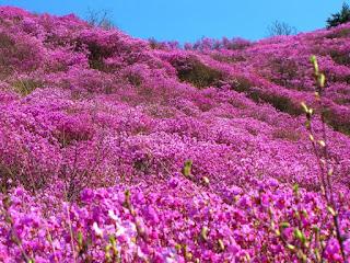 Azalea Flower Garden