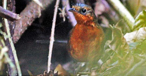 Species New to Science: [News 2013] The first known nest ...