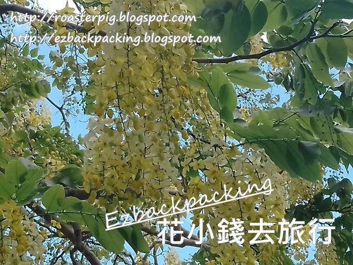 粉嶺祥華邨豬腸豆
