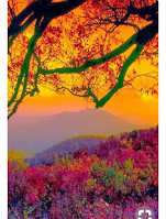 beautiful sunset landscape showing mountains and trees