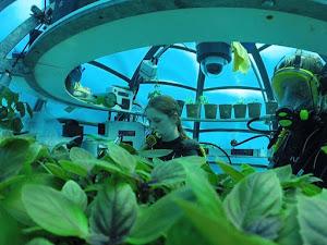 Underwater Farm, Inovasi Bercocok Tanam di Dalam Laut yang Memukau