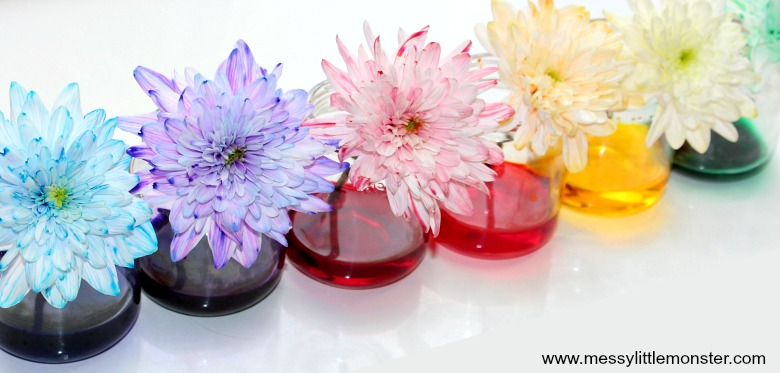 Colour Changing Flowers Science Experiment - A fun science project for kids