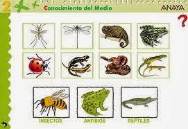 http://www.juntadeandalucia.es/averroes/centros-tic/41009470/helvia/aula/archivos/repositorio/0/74/html/datos/03_cmedio/03_Recursos/actividades/03/act6.htm