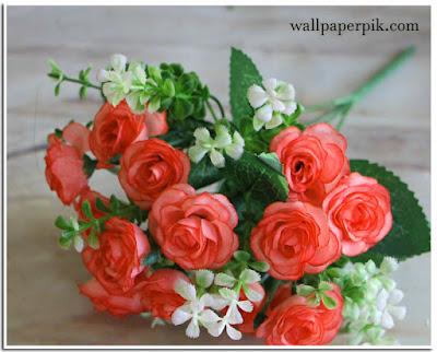 rose wallpaper hd beautiful rose wallpaper