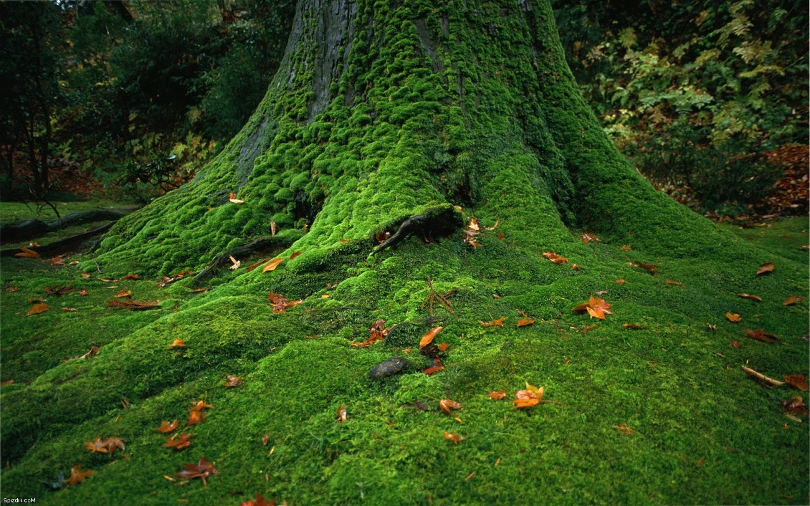 Central Wallpaper: Moss Covered Stones Trees HD Nature Wallpapers