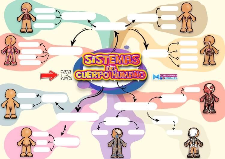 Plantilla en Word de Mapa Mental del Cuerpo Humano para Niños