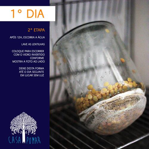 procedimento para germinar lentilhas