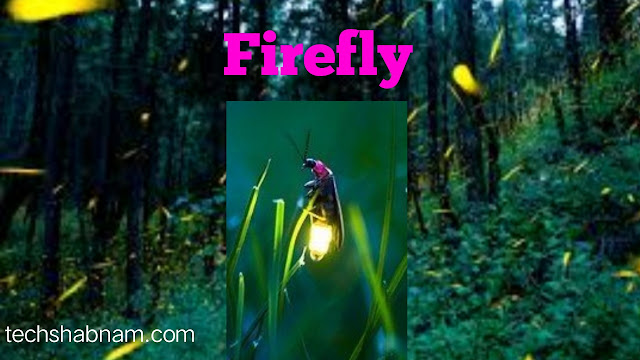 Firefly generate cold light