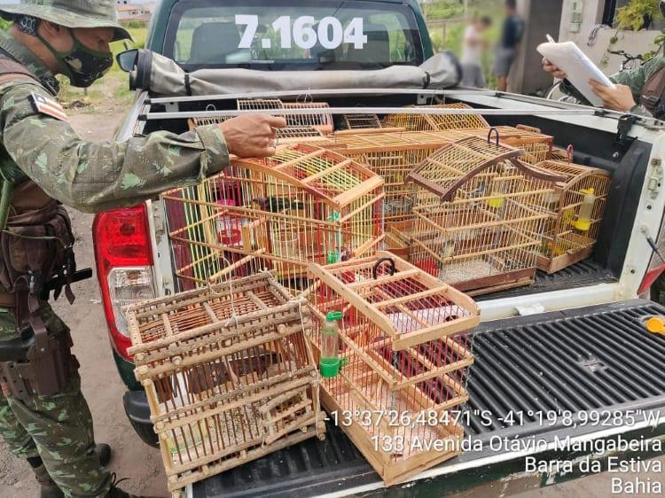 Cippa Lençóis resgata 25 animais silvestres em Barra da Estiva