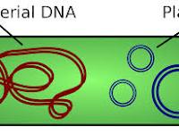 Apa Itu Plasmid? Yuk Pelajari Tentang Sejarah, Struktur, Sifat dan Manfaat Plasmid