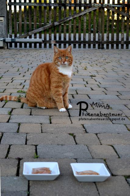 Katze Mimi wartet auf den Startschuss für den Futtertest