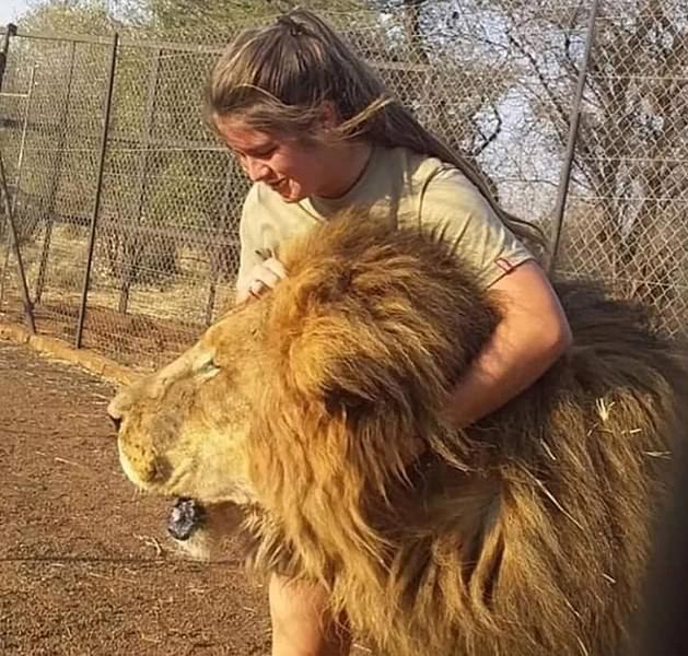 I leoni uccidono un 21enne in uno zoo sudafricano