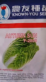 budidaya sawi putih, manfaat sawi putih, petsai, jual benih sawi, toko pertanian, toko online, LMGA Agro