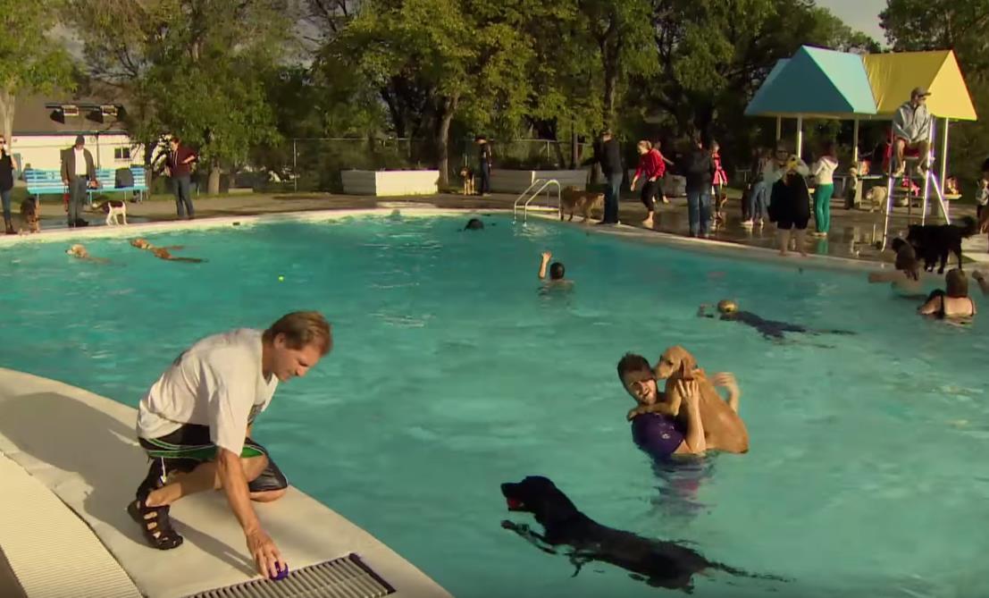 Dog day mascotas y due os pudieron disfrutar ba ndose en for Piscinas para perros grandes