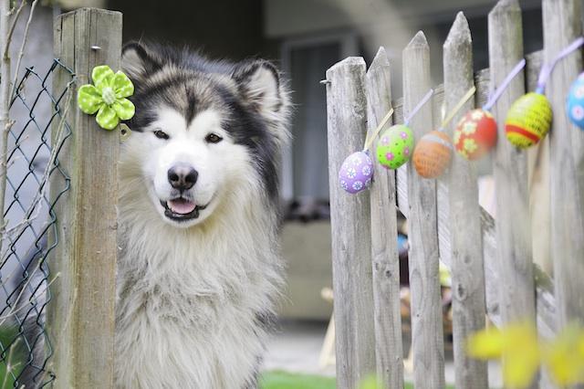 Πάσχα με τα σκυλάκια σας; Τα Do's και τα Dont's