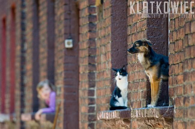 Łódź: Księży Młyn - jak pies z kotem