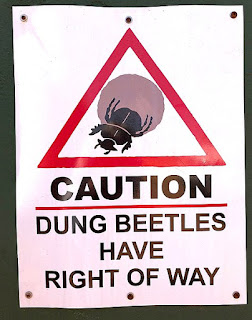 https://commons.wikimedia.org/wiki/File:Caution_Dung_Beetles,_South_Africa.jpg
