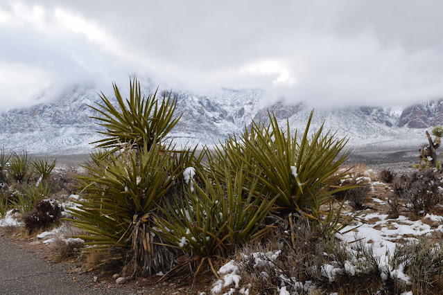 Red Rock Canyon Overlook with Snow