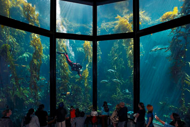 biggest aquarium in us, largest aquarium in the united states, largest aquarium in the us, largest aquarium in us, the largest aquarium in the united states, biggest aquarium in the us, biggest aquarium in the united states, biggest aquarium in united states, what's the biggest aquarium in the united states, largest aquarium in us 2019, where is the biggest aquarium in us