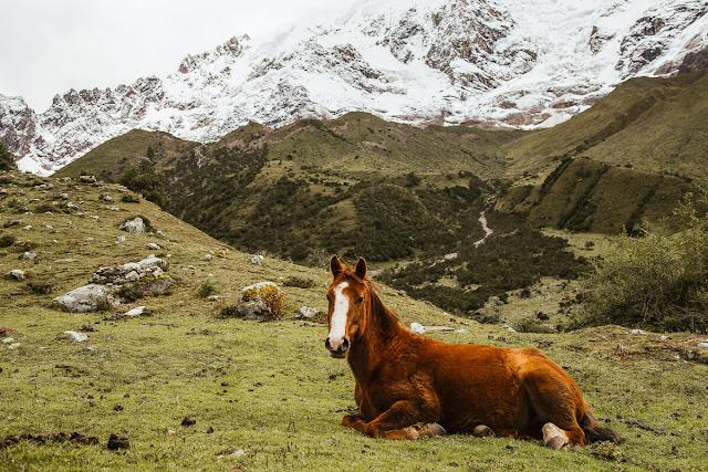 Peru Eco Camp sẽ là cơ hội để bạn kết nối với thiên nhiên, giữa các hồ nguyên sơ và không khí núi rừng, hành trình này chắc chắn sẽ giúp bạn làm mới tâm trí hiệu quả. Nếu có ý định trải nghiệm du lịch khác lạ và đề cao lối sống bền vững, bạn và gia đình có thể cân nhắc địa điểm này nhé.