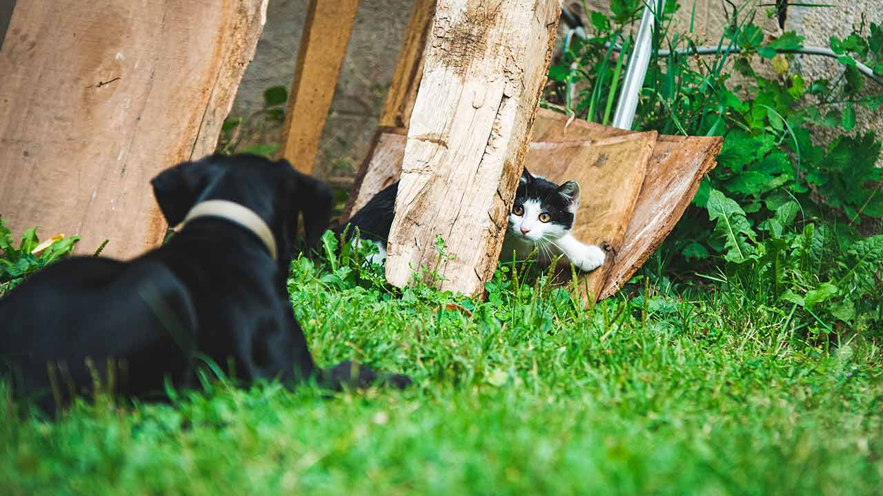 6 Tips To Improve The Cohabitation Between Your Cat And Your Dog