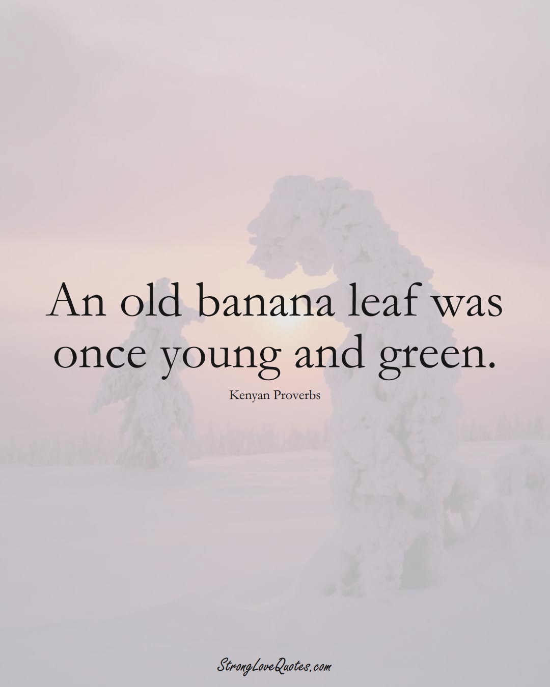 An old banana leaf was once young and green. (Kenyan Sayings);  #AfricanSayings